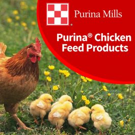 Purina Chicken Feed Products